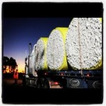 A couple of great photo's of the cotton harvest from Tayt - Moree Shire