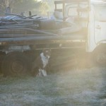 Tenterfield Photo competition entry - Frosty Morning Tenterfield