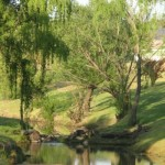Tenterfield Photo competition entry - Tenterfield Creek