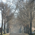 Tenterfield Photo competition entry - Tenterfield Street in Winter
