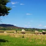 Balancing Rocks, by Liza from Glen Innes