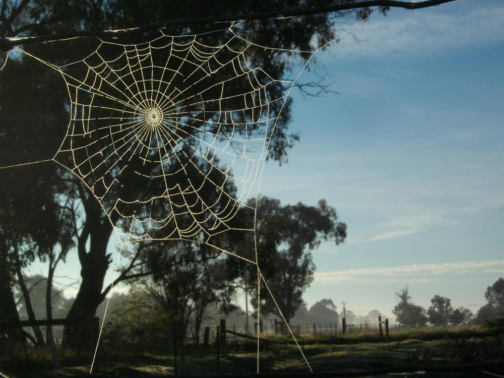 Spiders Web, by Zoe, from Walcha